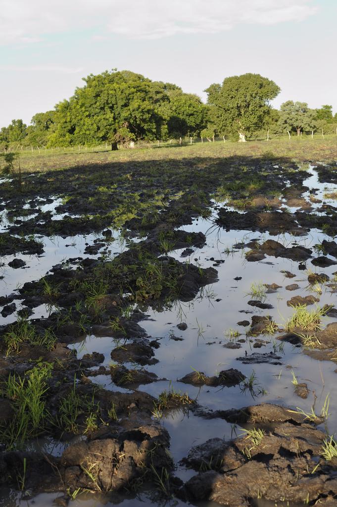 parcelle de terrain pour le maraichage à kamadena